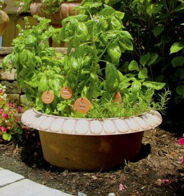 Bottomless Herb Planter